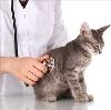 Ветеринарные клиники в Бессоновке